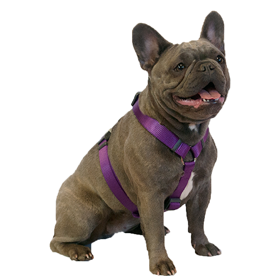Purple on Red Dingo Dog Harness