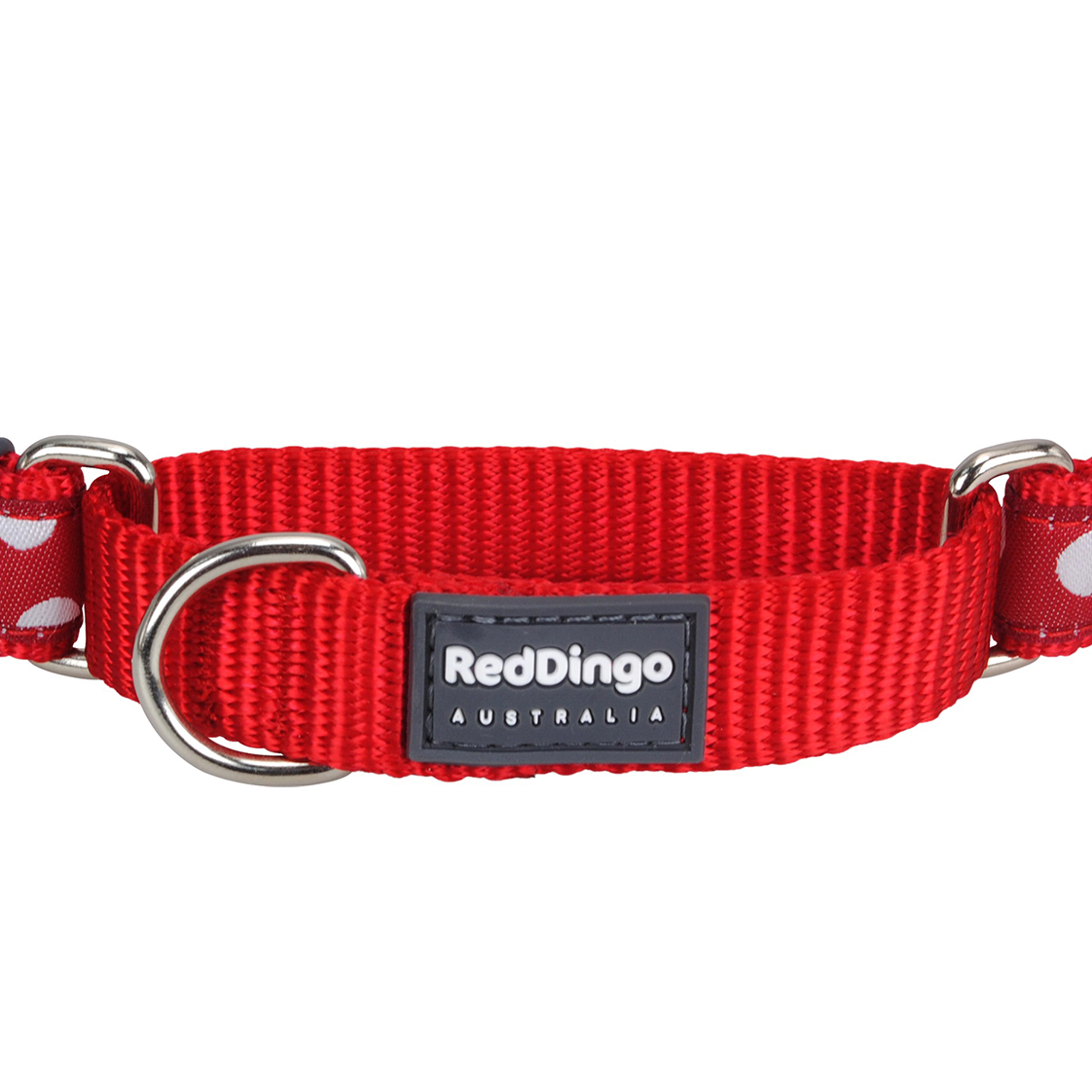 Where To Put Dogs Id Tag On Collar