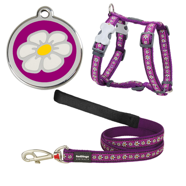 Red Dingo Daisy Chain Dog Harness, Lead & Tag Set