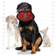 Ultimate odd ball paw red1