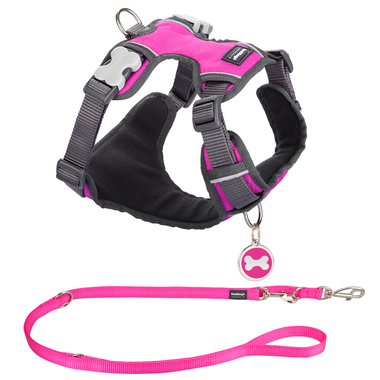 Red Dingo Padded Harness, Training Lead & Tag Set