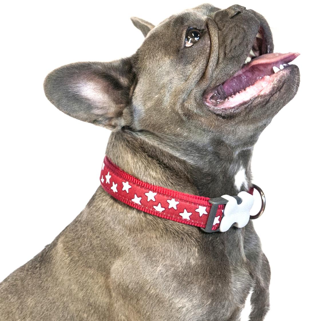 Red Dingo Star Dog Collar