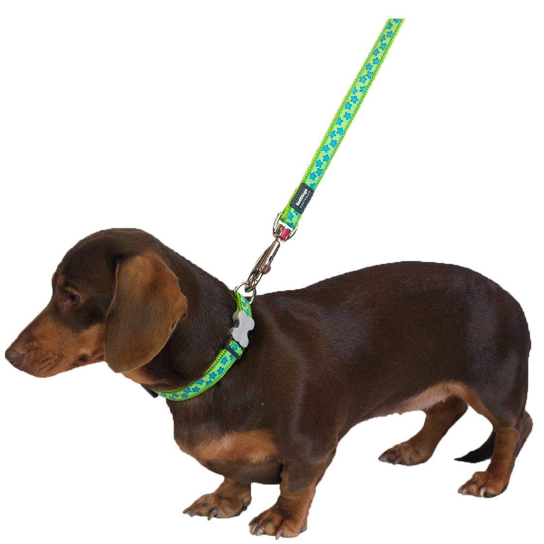 L St Lg on Red Dingo Dog Harness